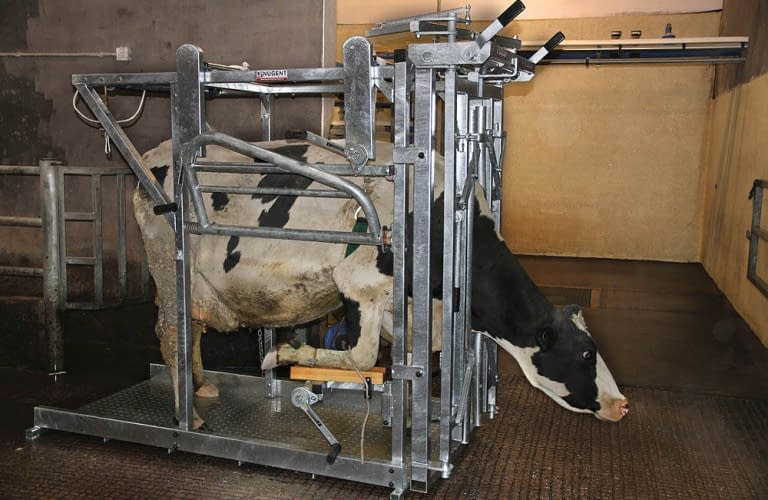 Nugent universal hoof tech3 Wexford Carlow and Wicklow