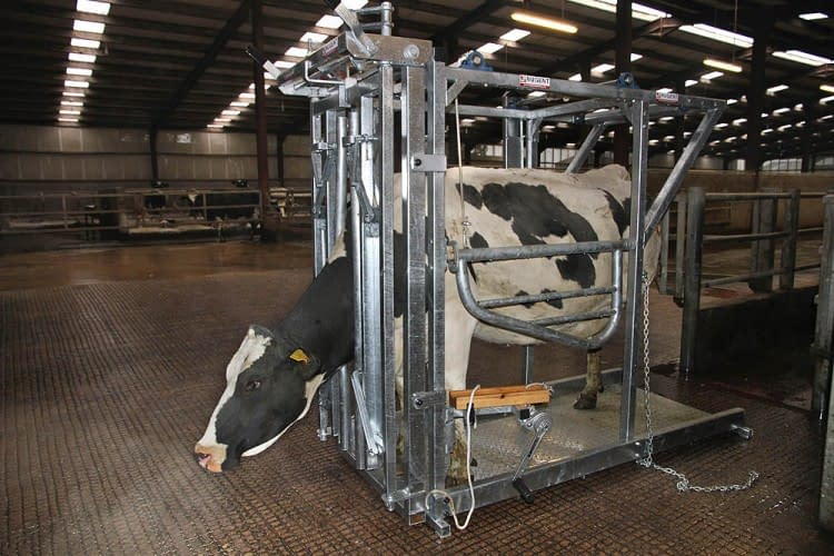 NUGENT UNIVERSAL HOOF TECH Wexford Carlow and Wicklow